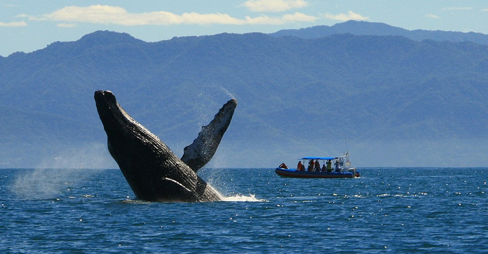 The Best Outdoor Activities In Puerto Vallarta - Whale Watching