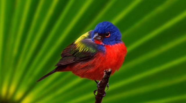 a colorful bird on a twig